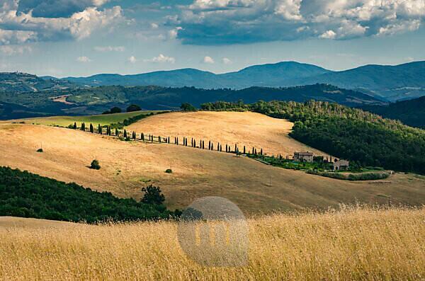 Europe, Italy, Strada Provinciale 27, Casole d'Elsa, Tuscany,