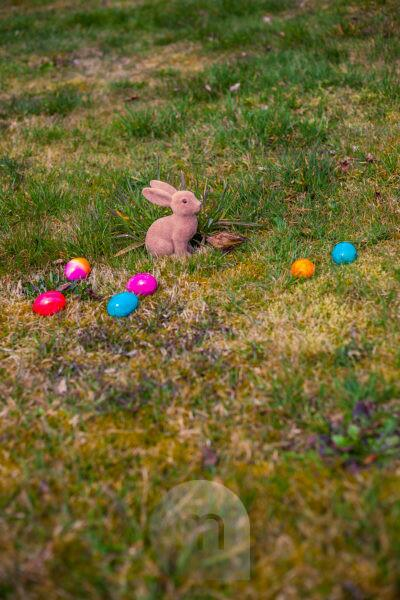 Germany, Bavaria, Easter, Garden, colorful Eggs and rabbit on gras at garden,
