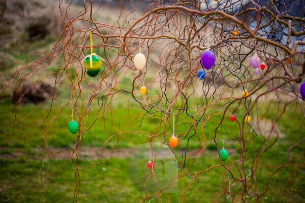 Germany, Bavaria, Easter, decoration eggs hanging on tree branch at garden,