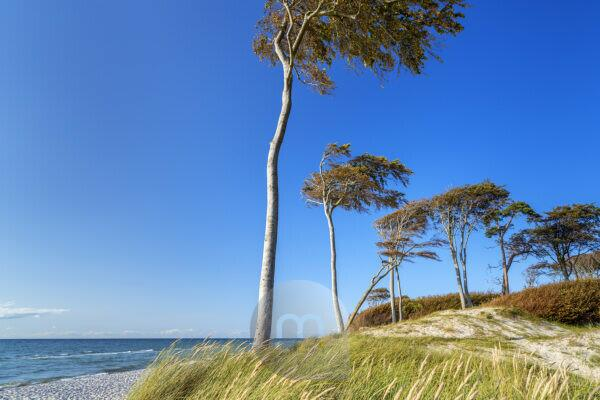 At the Baltic Sea on the west beach, Prerow, Fischland-Darß-Zingst, Mecklenburg-Western Pomerania, Germany, Europe