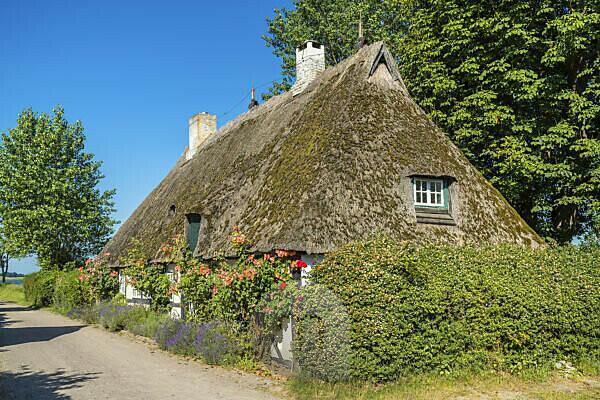 Reetdachhaus in Sieseby, Thumby, Schleswig-Holstein, Deutschland