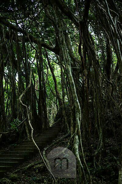 Treppe im Dschungel vom Kenting National Forest Recreation Area