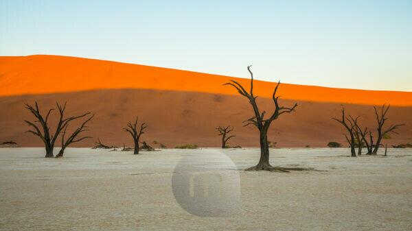 dead trees in the salt desert