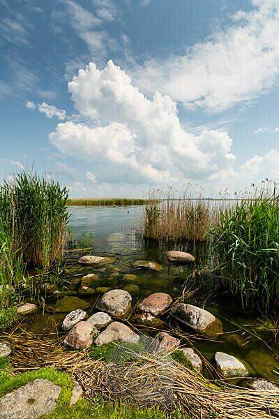 Europe, Poland, VoivodeshipWarmian-Masurian, The Land of the Great Masurian Lakes - Sniardwy / Spirdingsee - Popielno