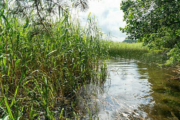 Mecklenburg, Labussee, bathing bay hidden in the reeds