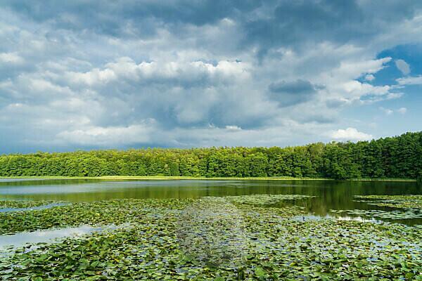 Mecklenburg Lake District, Kagar, idyll at the Kagarsee, water lilies, clouds