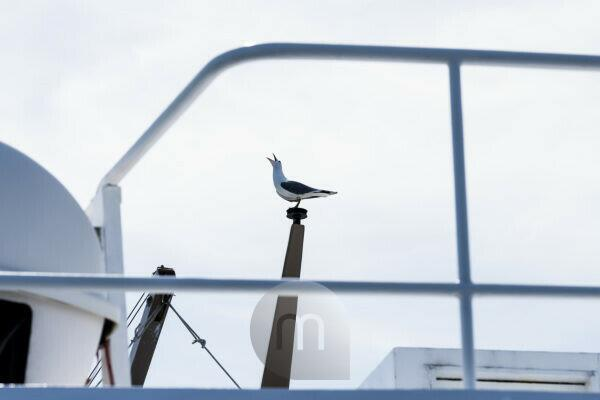 A seagull sits on the railing and makes the typical seagull cry.