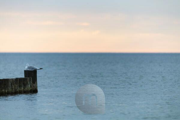 Seagull sitting at the end of a groyne