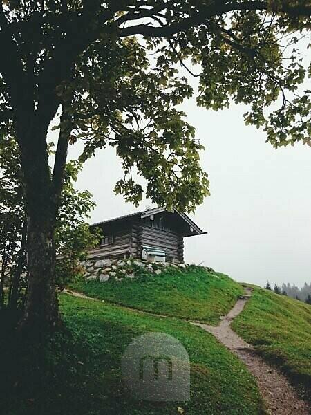 Hoher Kranzberg, Gipfelhaus, Baum