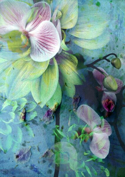 a floral montage of dahlia and orchid,