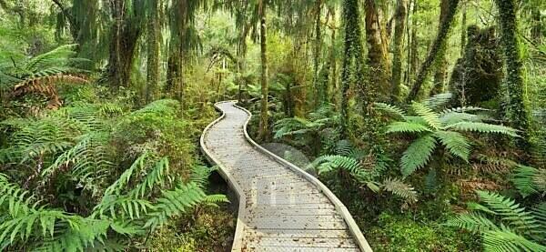 Regenwald, Weg, Steg, Ship Creek, West Coast, Südinsel, Neuseeland