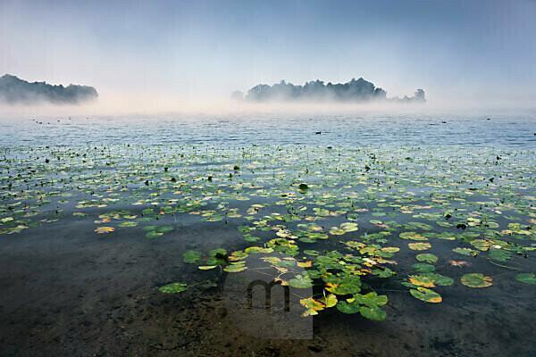 Lake Starnberger See, rose island, Roseninsel, water, fog, water lilies, morning, atmosphere, light, ducks, blue,