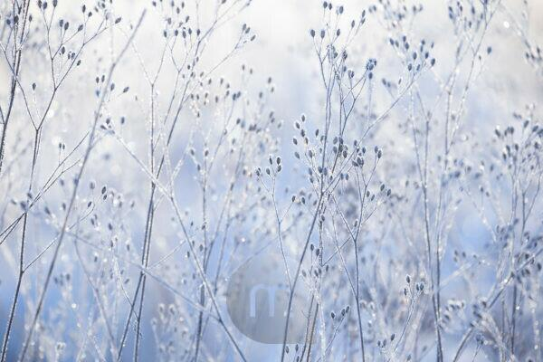 Beautiful ice crystal on dried plants on pastel blue background