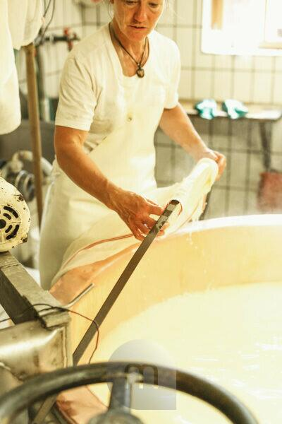 dairymaid porcesses fresh milk to aromatic alp cheese, report, The cut milk is lifted out of the bowl and is processed to a loaf,