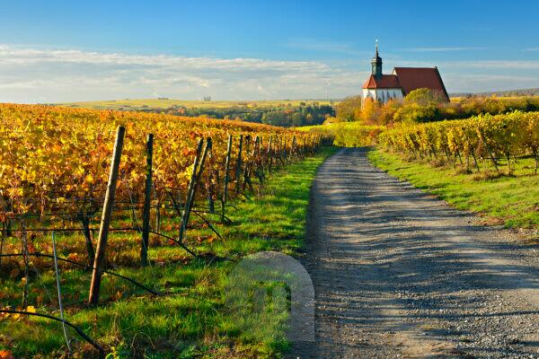 Germany, Bavaria, Franconia, Volkach, Wallfahrtskirche Maria im Weingarten (church), vineyards, autumn