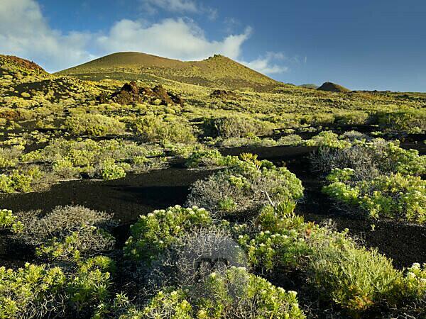 Vulkanlandschaft beim Pico de Tablas, Insel La Palma, Kanarische Inseln, Spanien