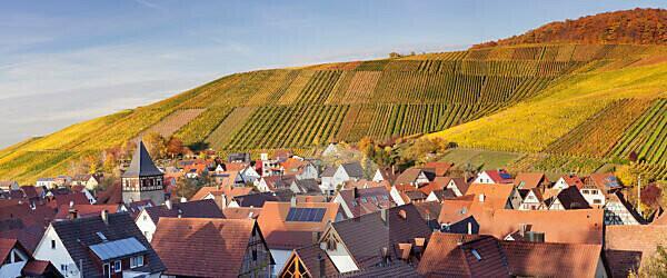 Strümpfelbach with vineyards in autumn, Rems Murr Kreis (district), Baden Württemberg, Germany