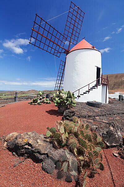 Windmill in the cactus garden Jardin de Cactus of Cesar Manrique, Guatiza, Lanzarote, Canary islands, Spain