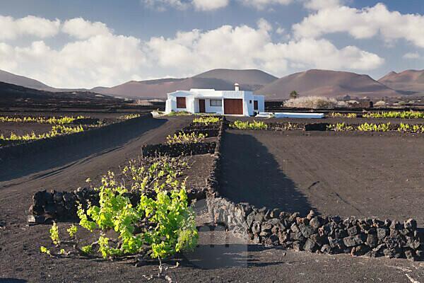 Weinreben und Finca im Weinanbaugebiet La Geria, Feuerberge Montanas de Fuego hinten, Lanzarote, Kanarischen Inseln, Spanien