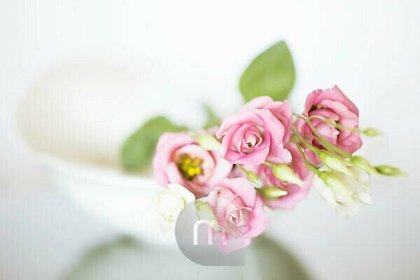 Eustoma flowers in a white vase