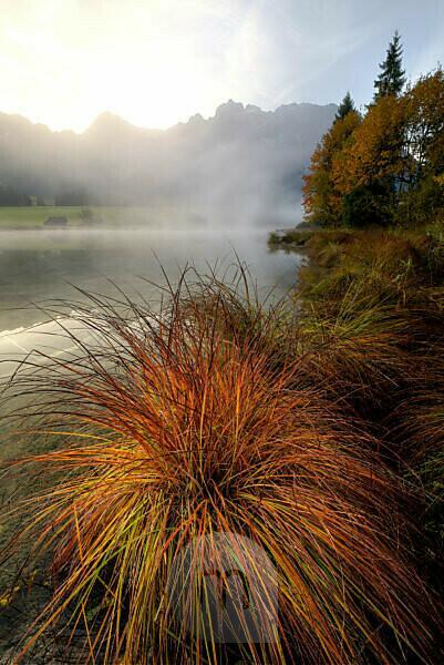 Blick auf ein herbstliches Grasbüschel am Ufer des Schmalensee bei Mittenwald, im Hintergrund Nebel und das Karwendel.