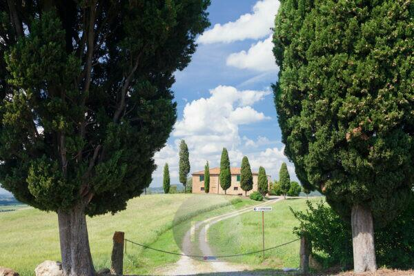 Country house with cypresses, Pienza, Val d'Orcia, Orcia valley, Tuscany, province Siena, Italy
