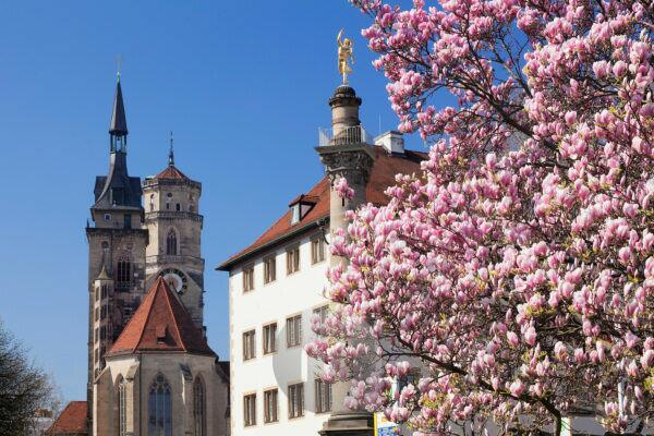 Old office and abbey church with magnolia tree, Stuttgart, Baden-Wuerttemberg, Germany