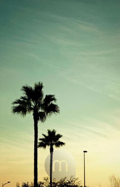 Palms, sundown, sunrise, Morocco