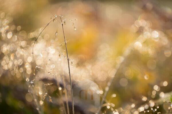 Frozen hay on beautiful bokeh background