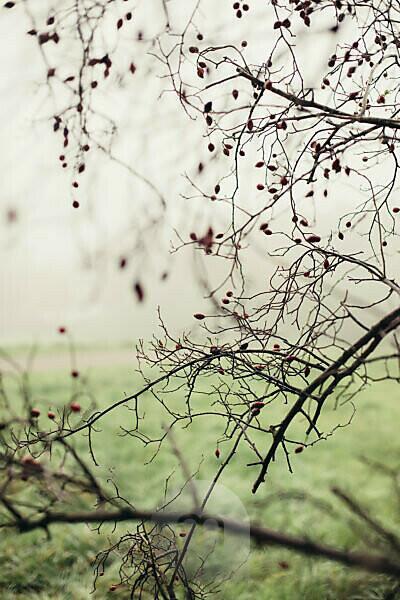 Eine Wanderung um den Obersee in Bielefeld (Schildesche) an einem nebeligen und grauen Tag im Oktober,