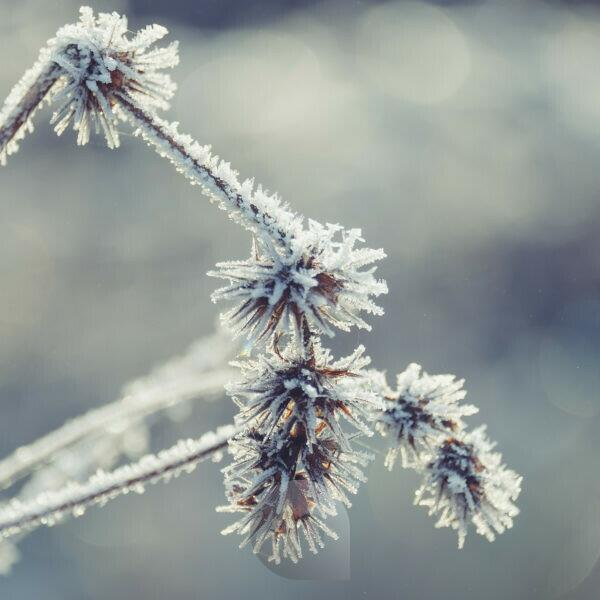 Winter mood close up frozen grass with hoarfrost