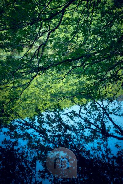 branch of a tree hanging over the water with reflexion