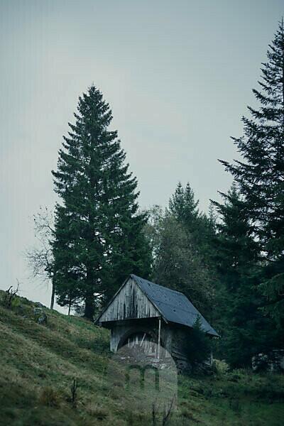alte Mühle mit Mühlrad an einem Berghang mit Tannenbäumen im Schwarzwald, Regenwetter