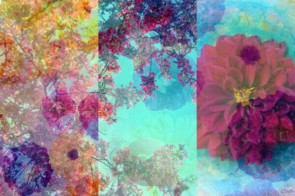 photomontage, multiple exposure, flowers, different, detail,