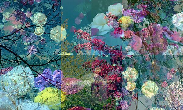 Fotomontage, Blüten, Blumen, Bäume, Detail, Unschärfe,