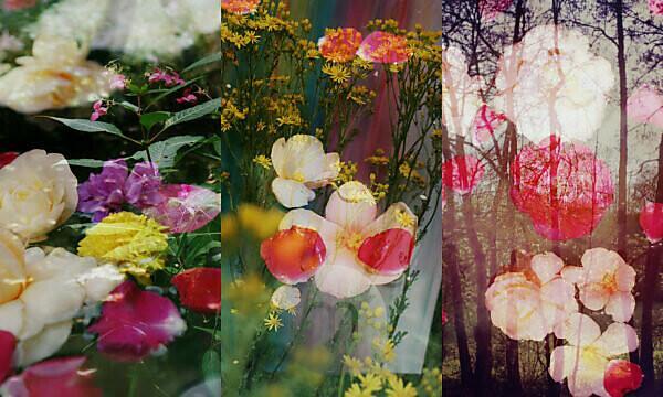 Fotomontage, Blüten, Blumen, Sträucher, Detail, Unschärfe,