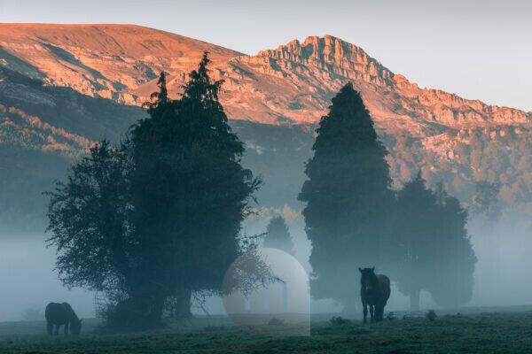 Horses in the Gorbeia nature park, morning fog against mountain backdrop with alpine glow in northern Spain