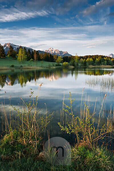 Morgens an einem kleinen idyllischen See im bayrischen Allgäu, Alpen im Hintergrund, Ufervegetation im Vordergrund, Wasserspiegelung