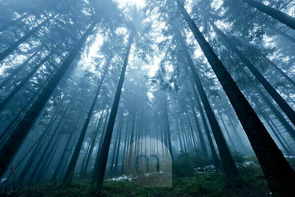 Boubin, in German 'Kubany' primeval forest in the Czech Republic in autumn fog
