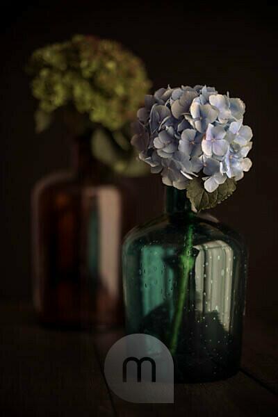 Hydrangea and glass bottles