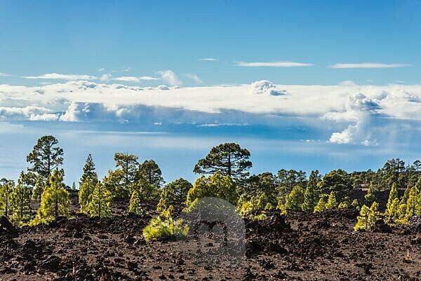 Die Hochebene des Nationalpark El Teide mit Blick auf die tieferliegende Wolkendecke.