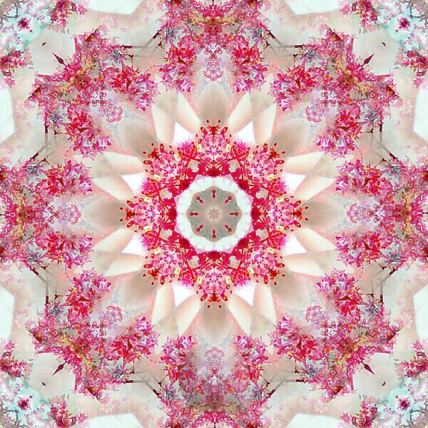 Photographic flower mandala, red, beige,