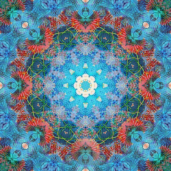 Photographic flower mandala, blue, turquoise, red,