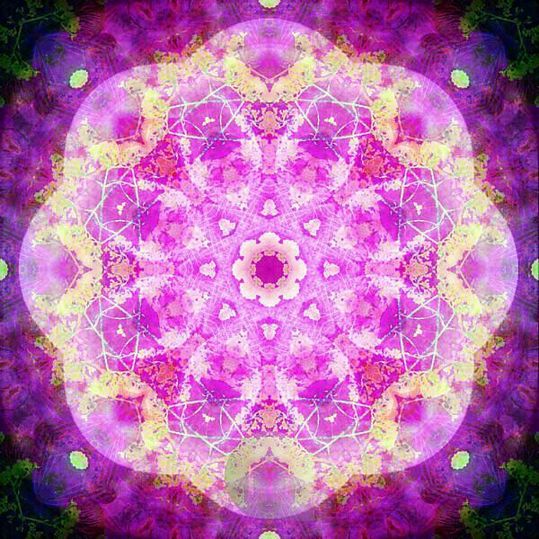 Photographic flower mandala, pink, yellow,
