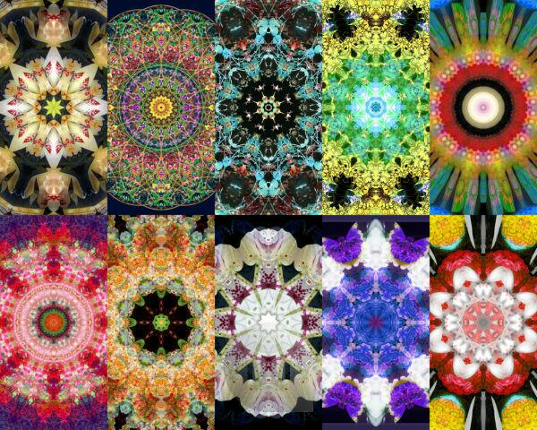 Photographic flower mandala, many, different