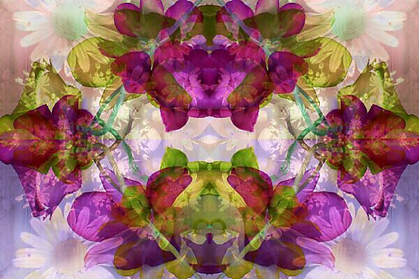 Photomontage with various flowers, mandala,