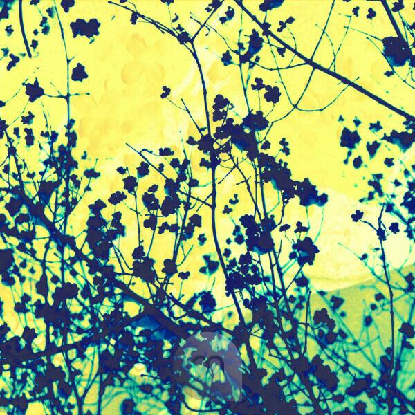 Plant against yellow background, composing