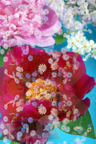 Photomontage, flowers, multicolored