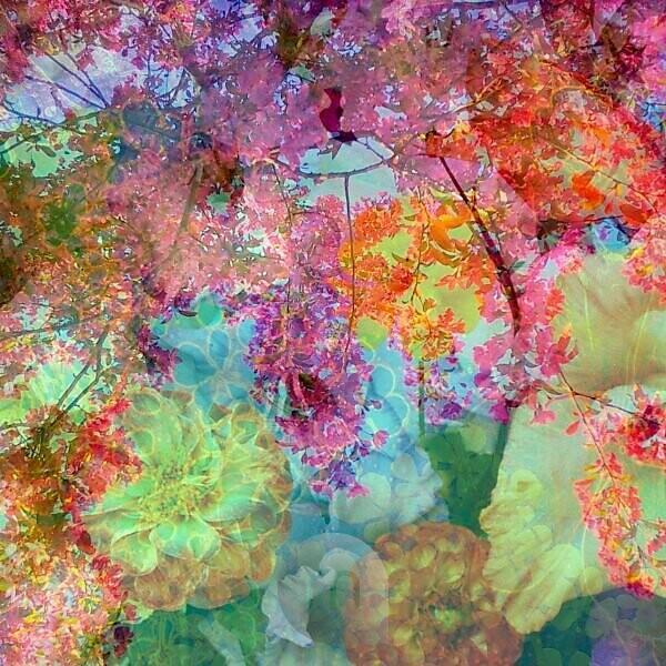 Photomontage, flowers, multicolored