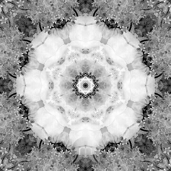 Flower Mandala, composing, white, gray,